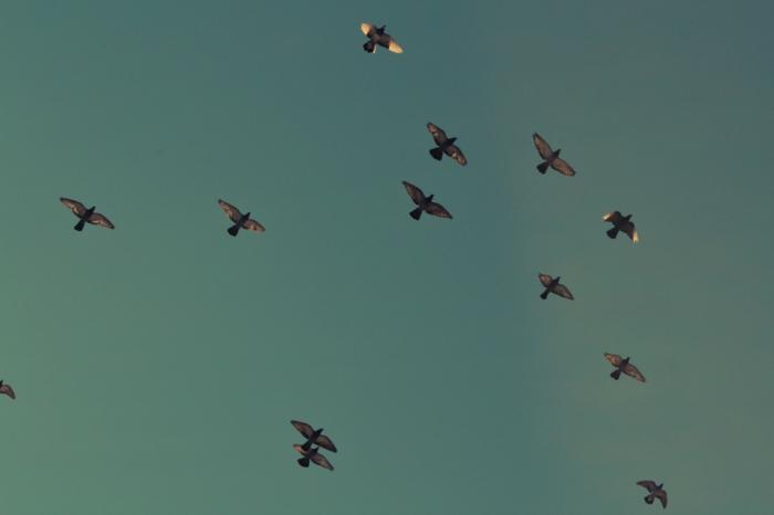 Espatriare è anche tornare (a volte) - Uccelli migratori