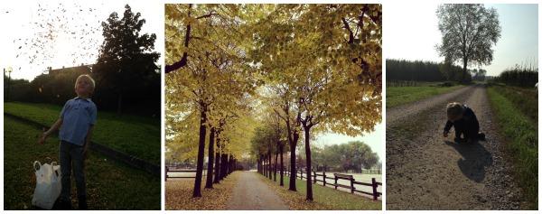 la magia dei colori dell'autunno
